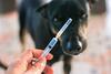 Hand hält Spritze in der Hand dahinter steht ein Hund