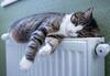Katze liegt auf der Heizung.
