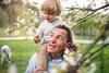 Großvater mit seinem Enkel an einem blühenden Apfelbaum