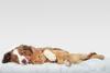 Hund und Katze liegen