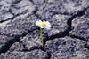 Die Superkraft unserer Psyche: Resilienz