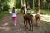 Zwei Kinder gehen mit zwei Alpakas in einem Wald spazieren